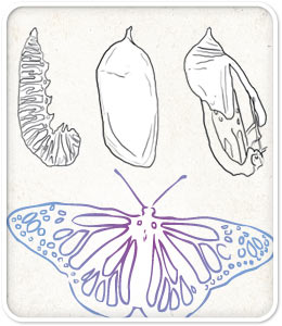Transformation: the field guide image